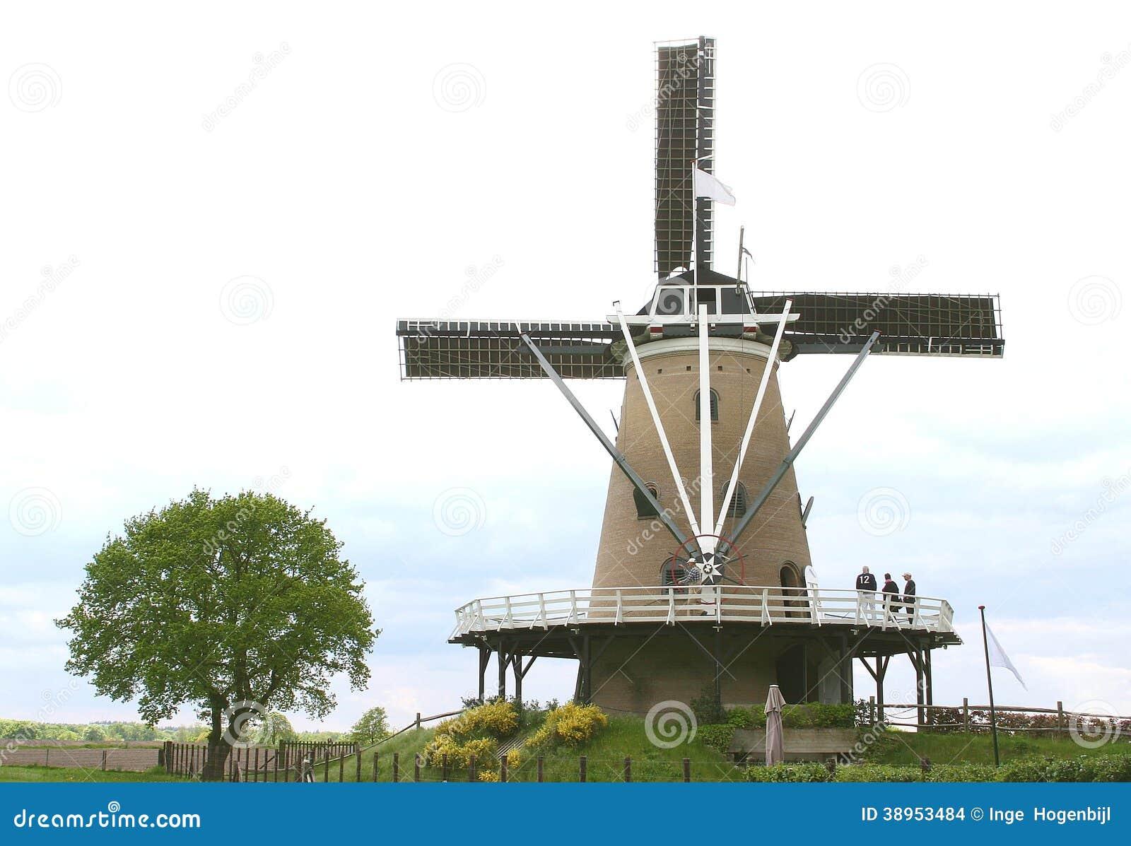 与风车的典型的荷兰开拓地风景