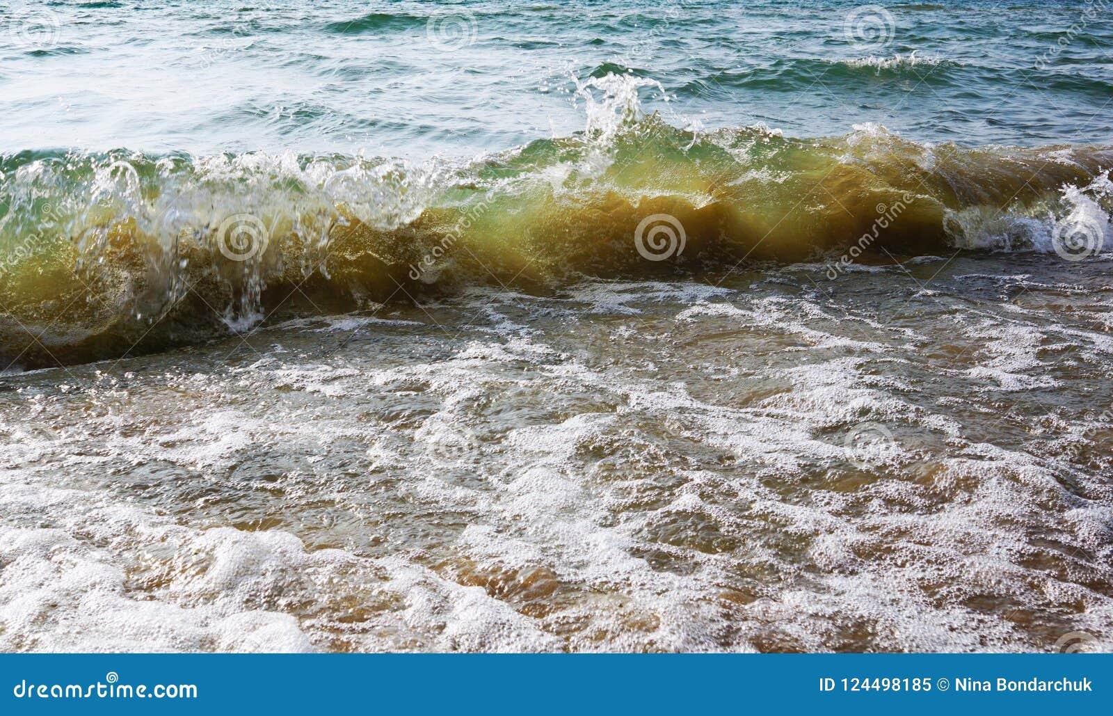 与黄沙里面的一系列柔和的绿色