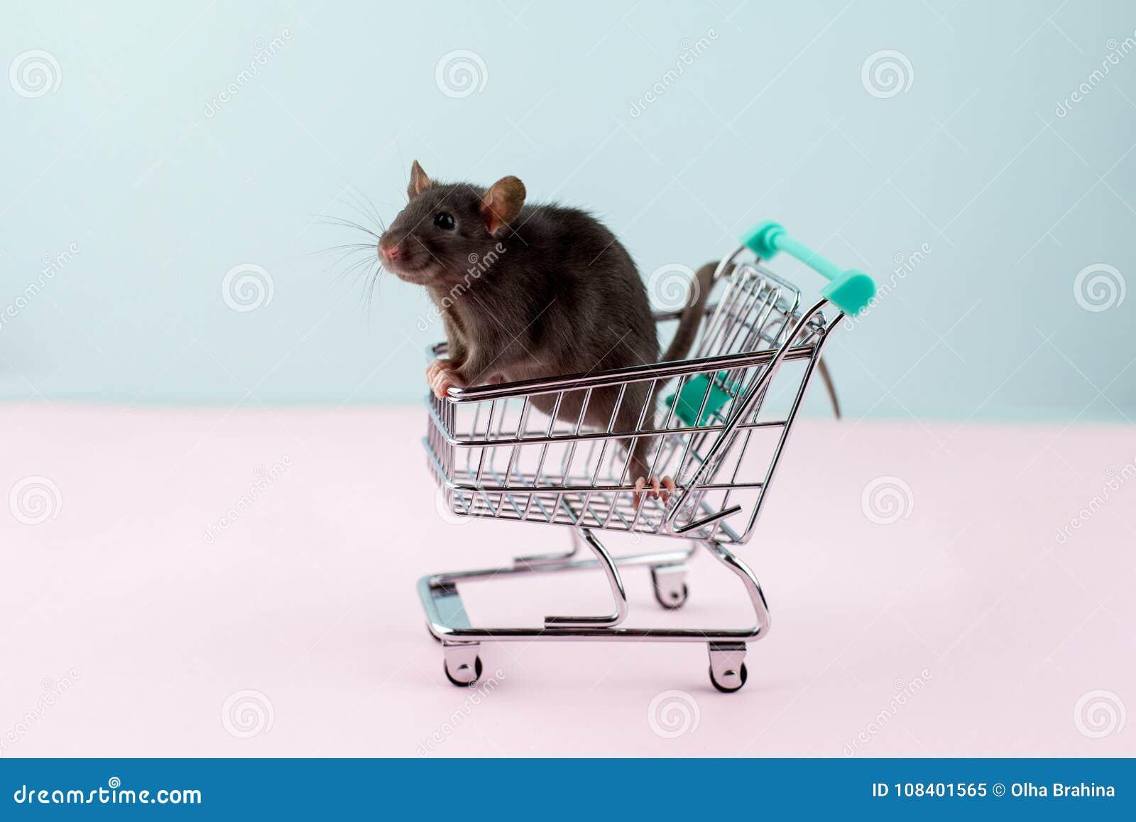 与鼠的最小的shoping的概念在杂货台车
