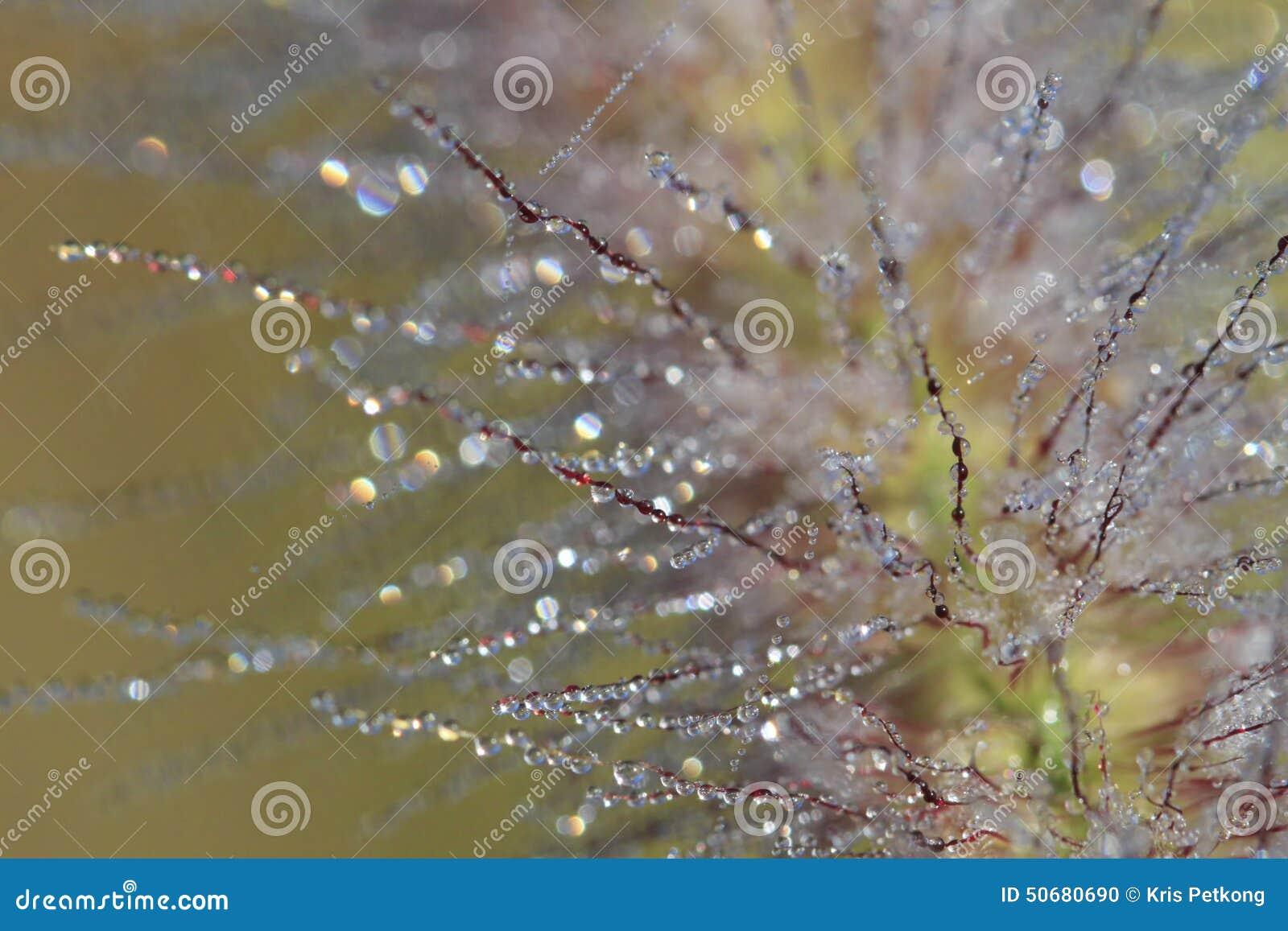 Download 与水下落的草 库存照片. 图片 包括有 下落, beauvoir, 自然, 生活, 关心, 结构树, 新鲜 - 50680690
