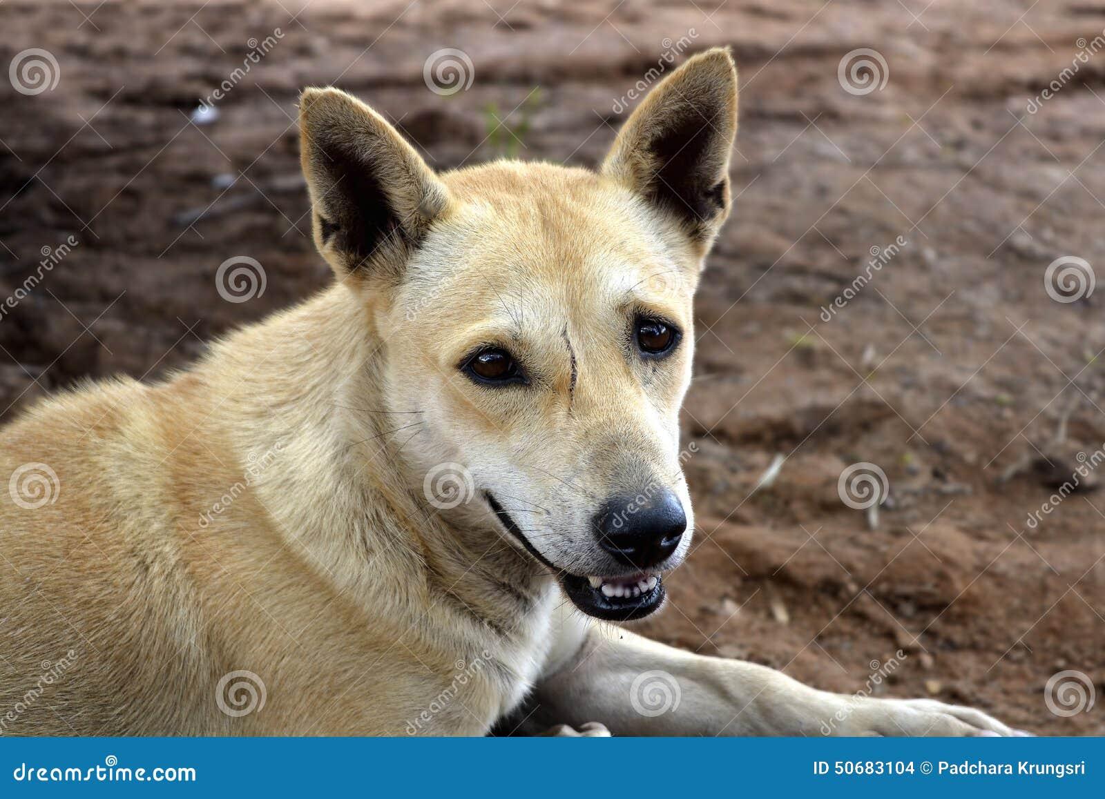 Download 丑恶的scae具有的狗 库存照片. 图片 包括有 草甸, 人力, beauvoir, 健康, 孩子, 自然 - 50683104