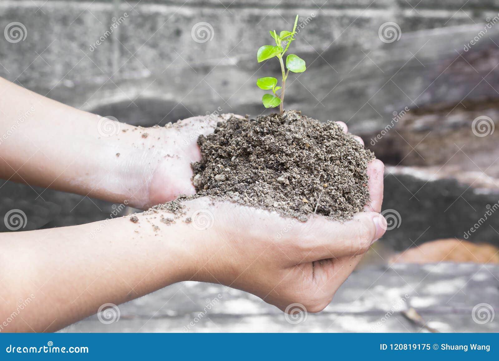 世界环境日概念:拿着在云彩背景被弄脏的世界地图的人的手小树