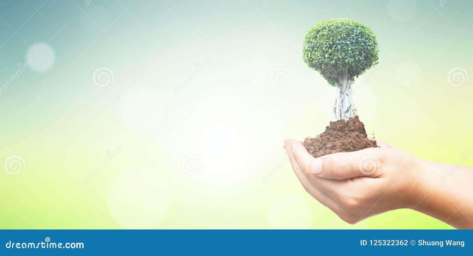 世界环境日概念:拿着在绿色森林背景的人的手大树