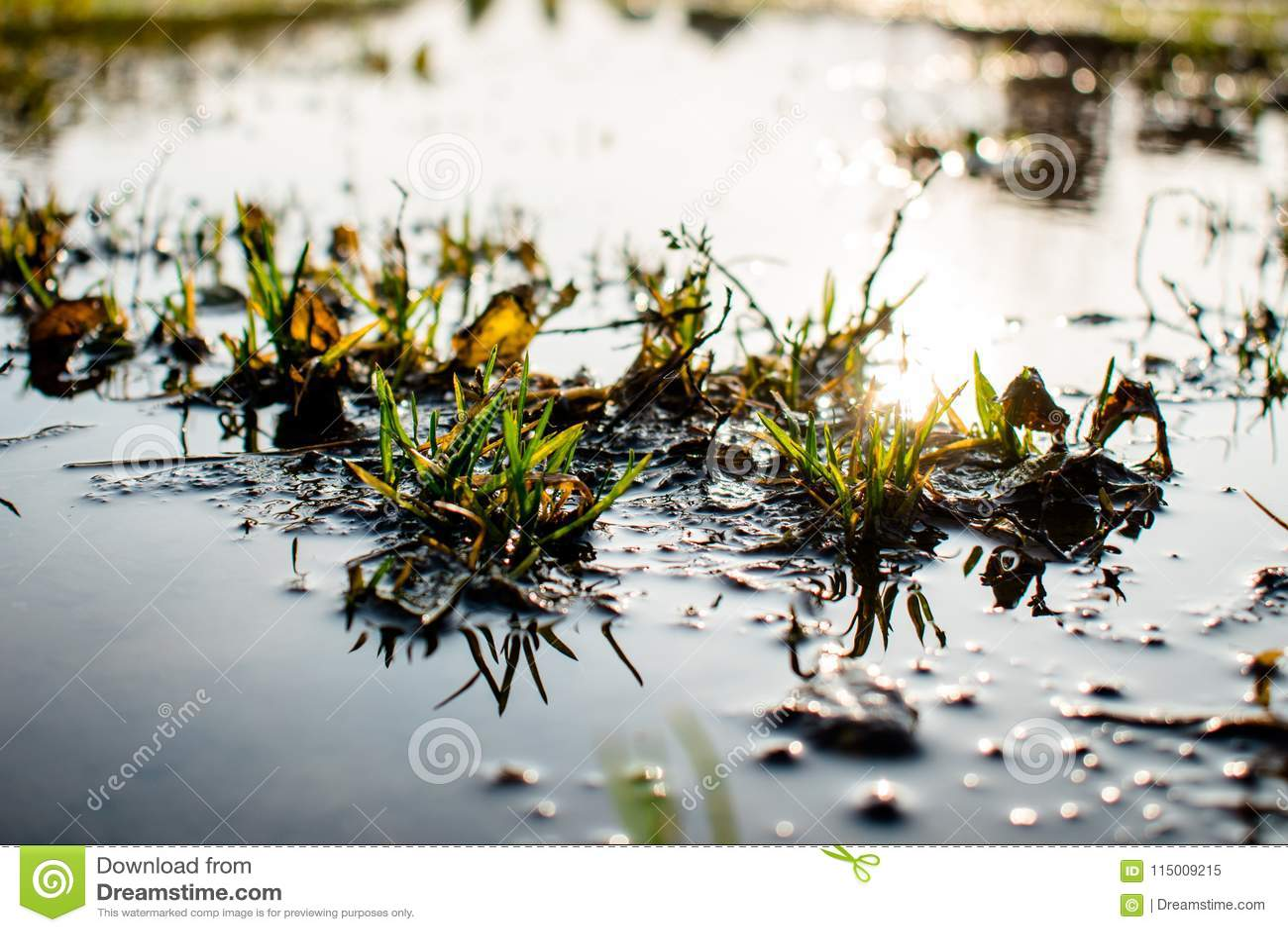 丛在水和太阳的草怒视