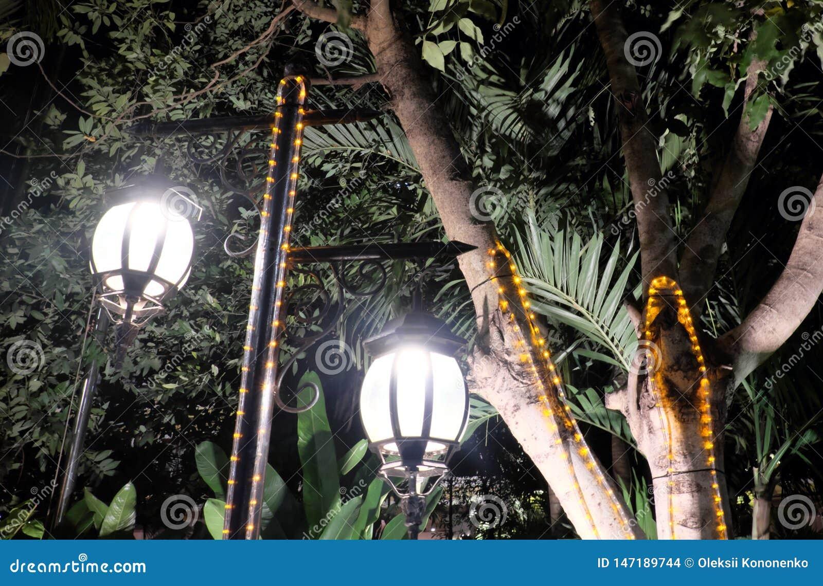 两个伪造的葡萄酒灯笼照亮树的叶子 明亮轻发出从街灯