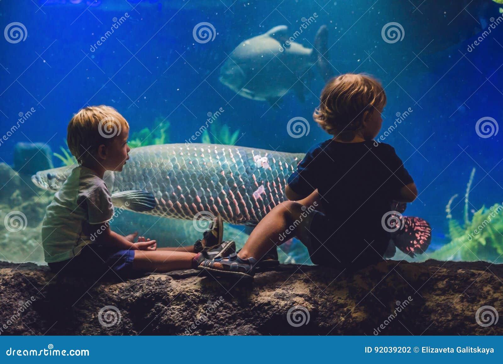 两个男孩看在水族馆的鱼