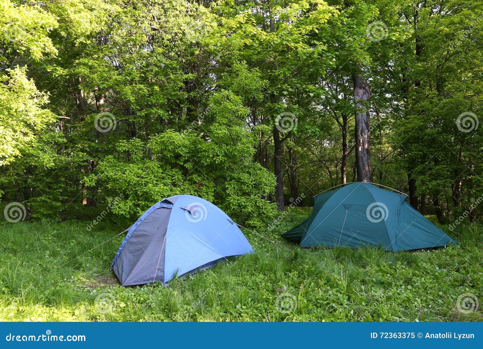 两个蓝色帐篷在绿色森林里