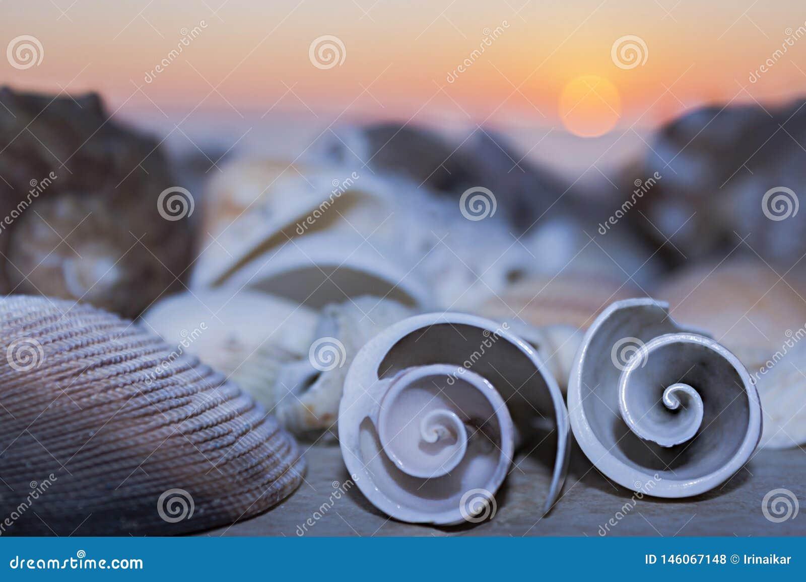 两个贝壳在海和日落的背景卷曲在黄昏