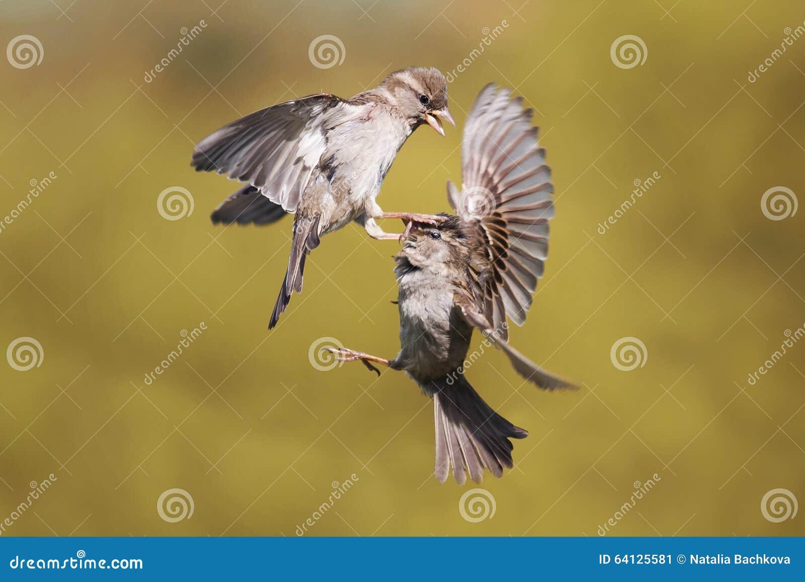 两个年轻人麻雀举起战斗