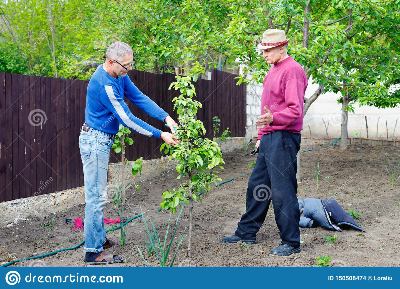 两位农夫在室外庭院谈论照料年轻洋梨树