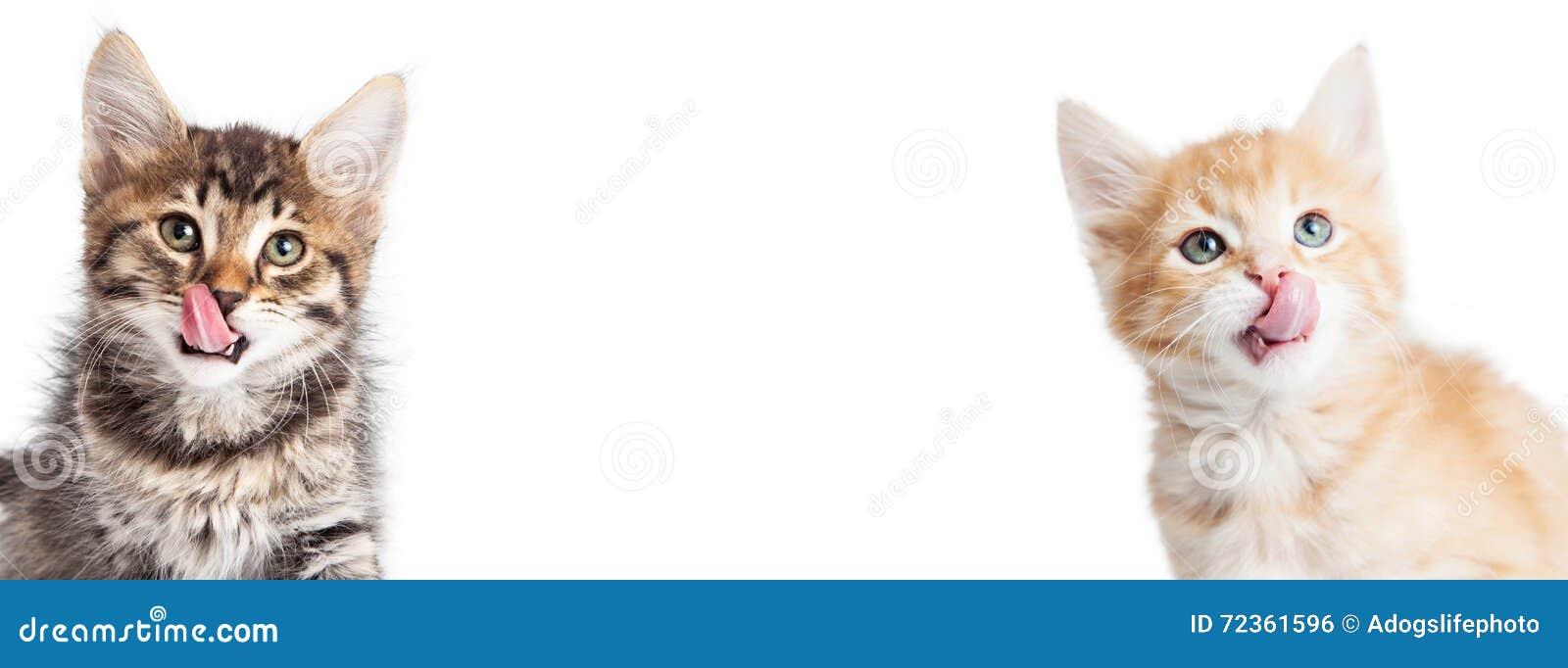 两只饥饿的小猫水平的横幅