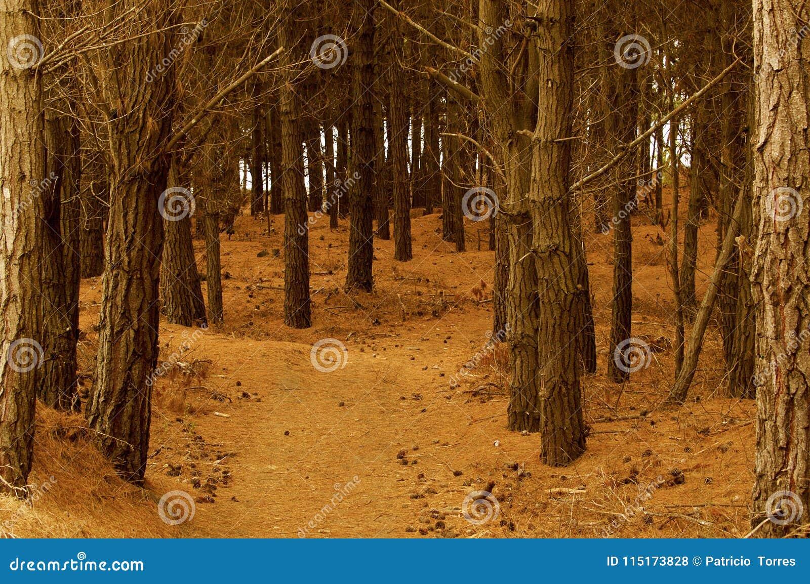 两条路和避免被迷惑的森林的决定