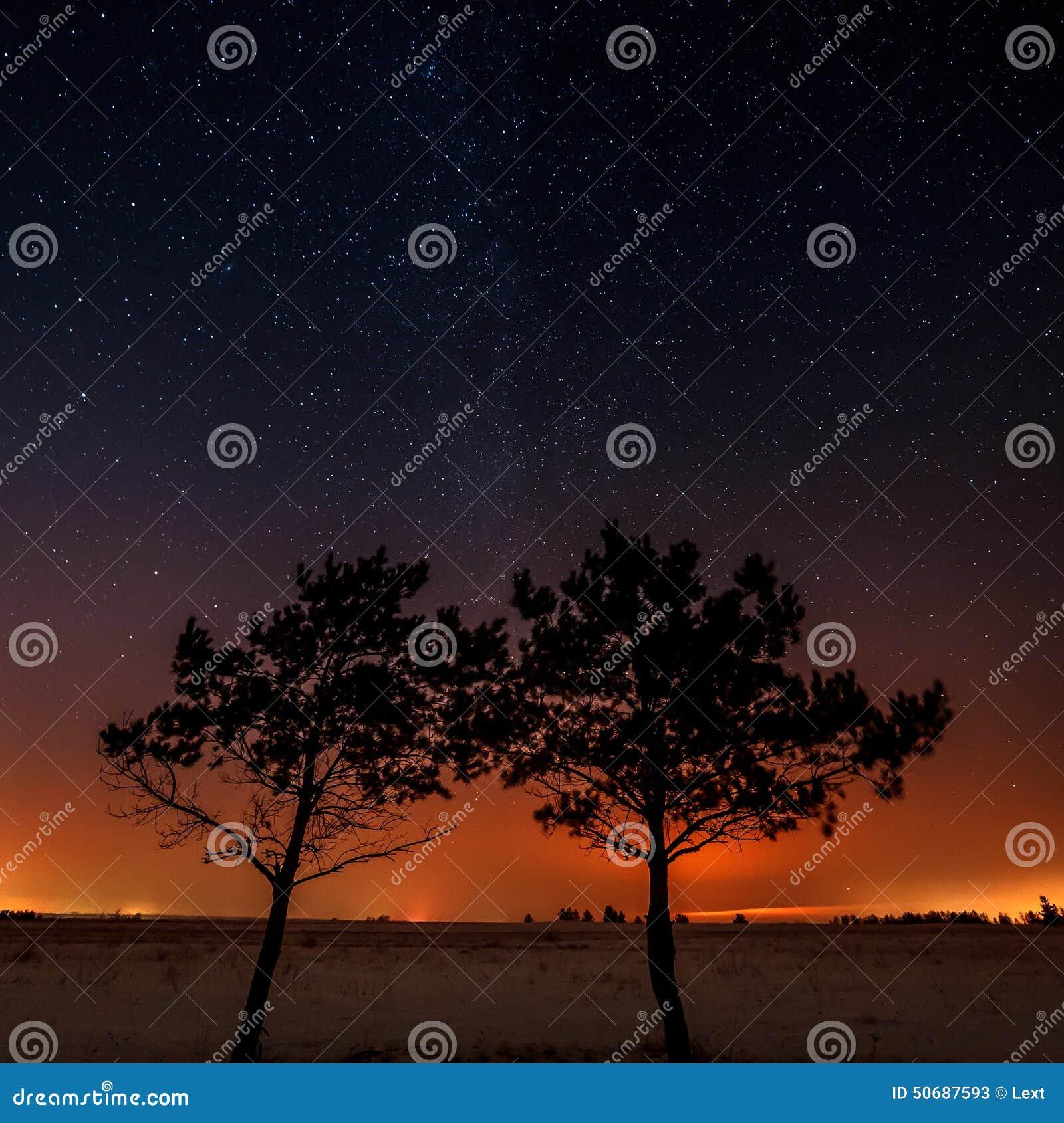 两棵树在星的背景一起增长