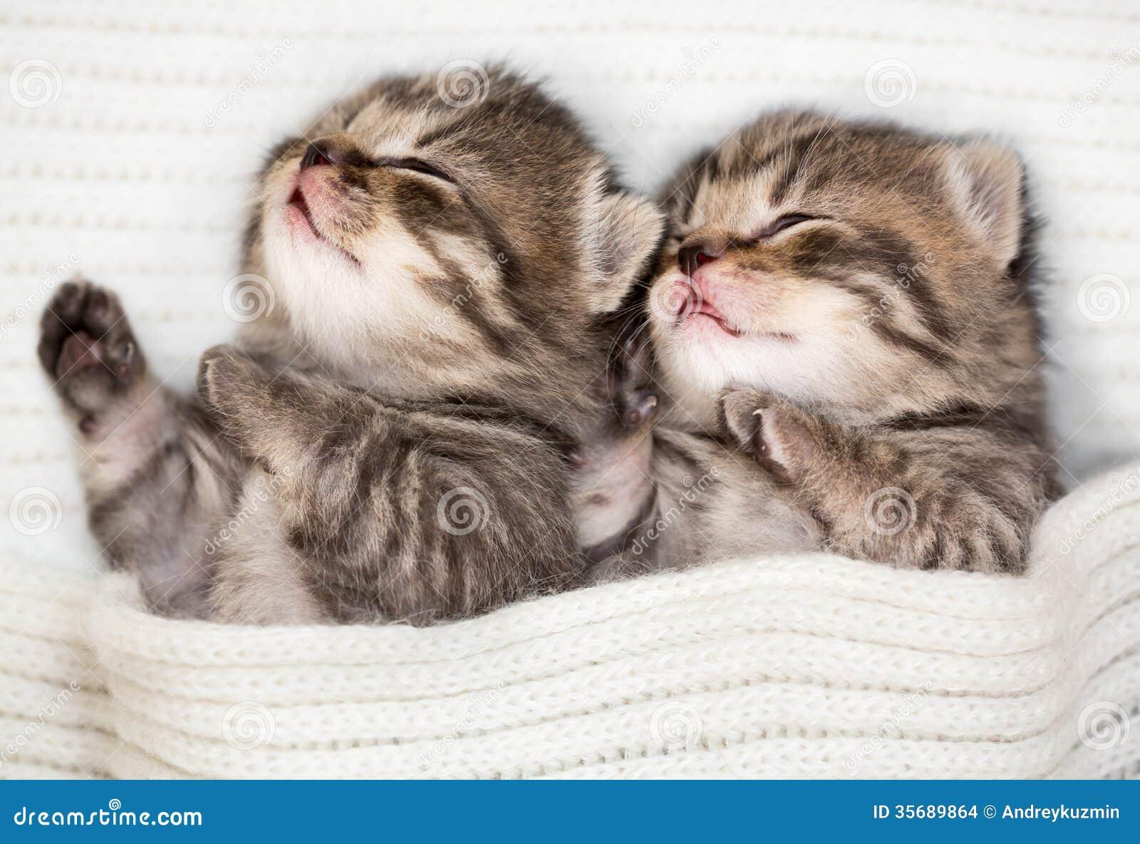 两睡觉小小猫