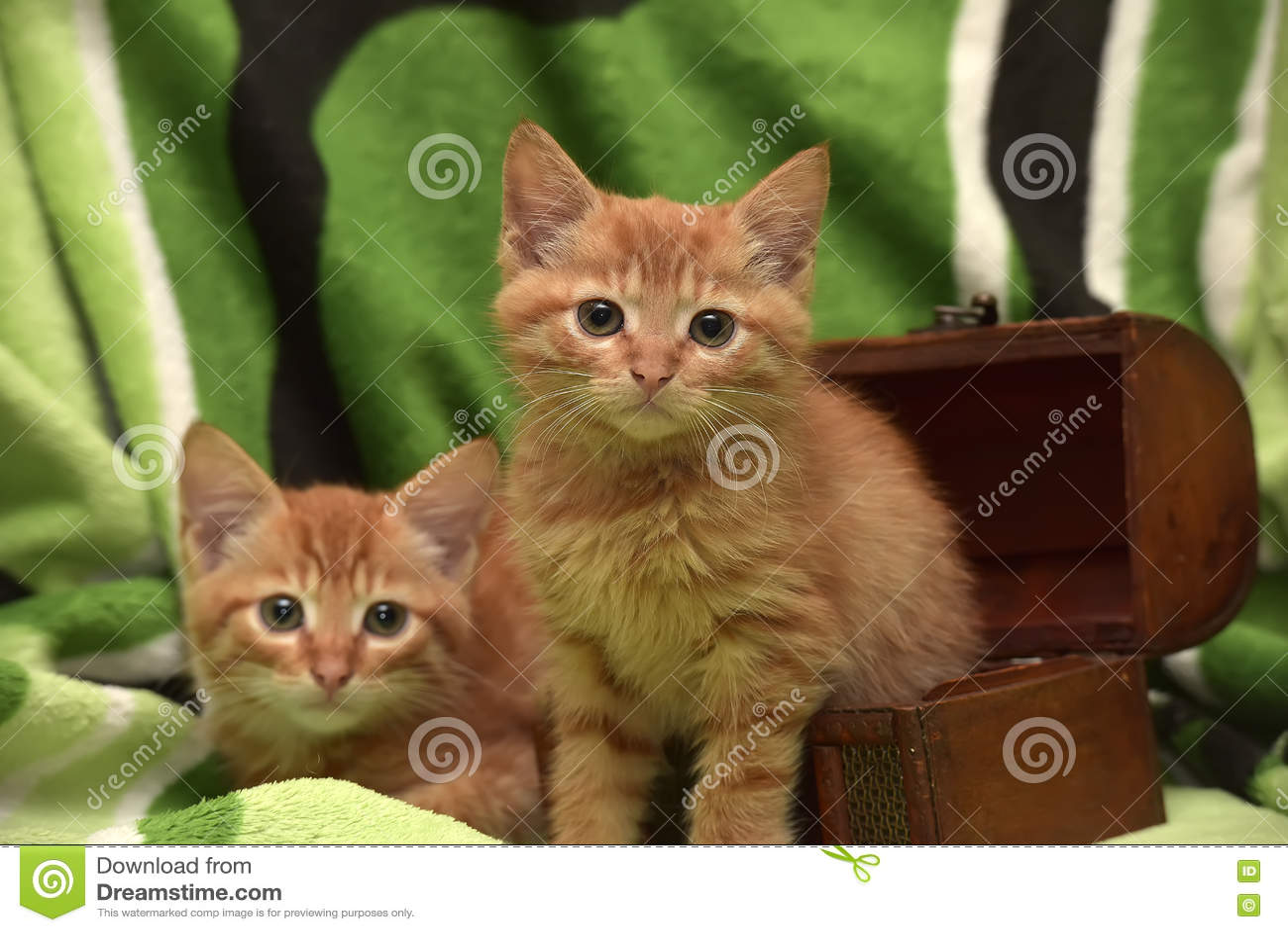 两红色小猫和箱子