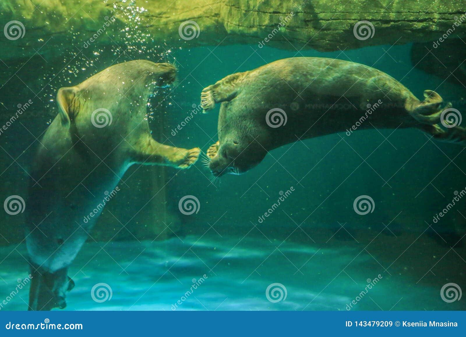 两贝加尔湖封印互相使用