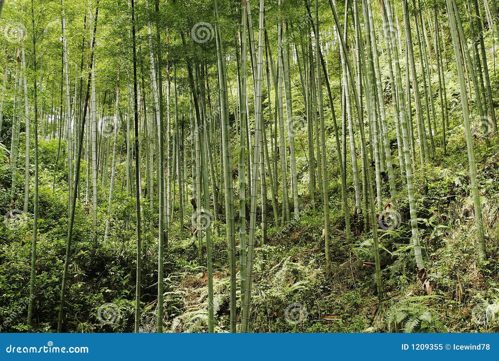中国森林山