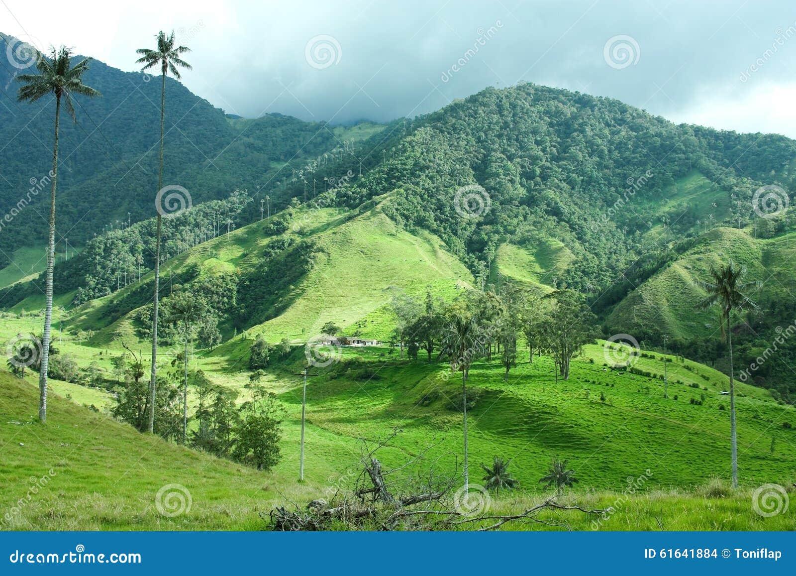 中央cocora咖啡哥伦比亚山脉著名生长横向庄严山国家掌上型计算机占优势quindio区域s周围结构树谷蜡 哥伦比亚