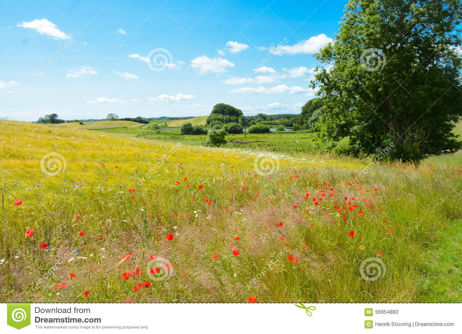 丹麦夏天风景