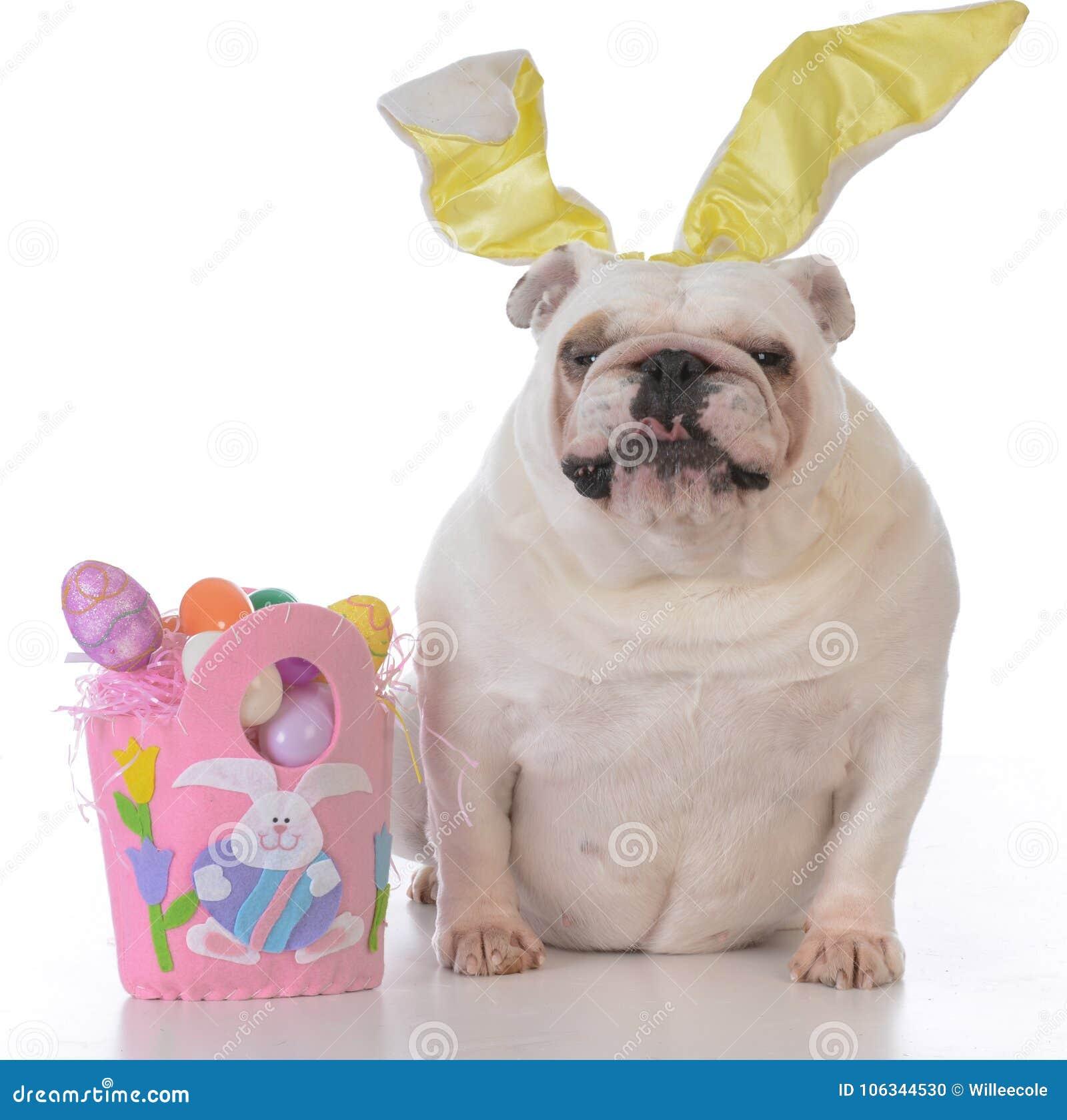 为复活节装饰的狗