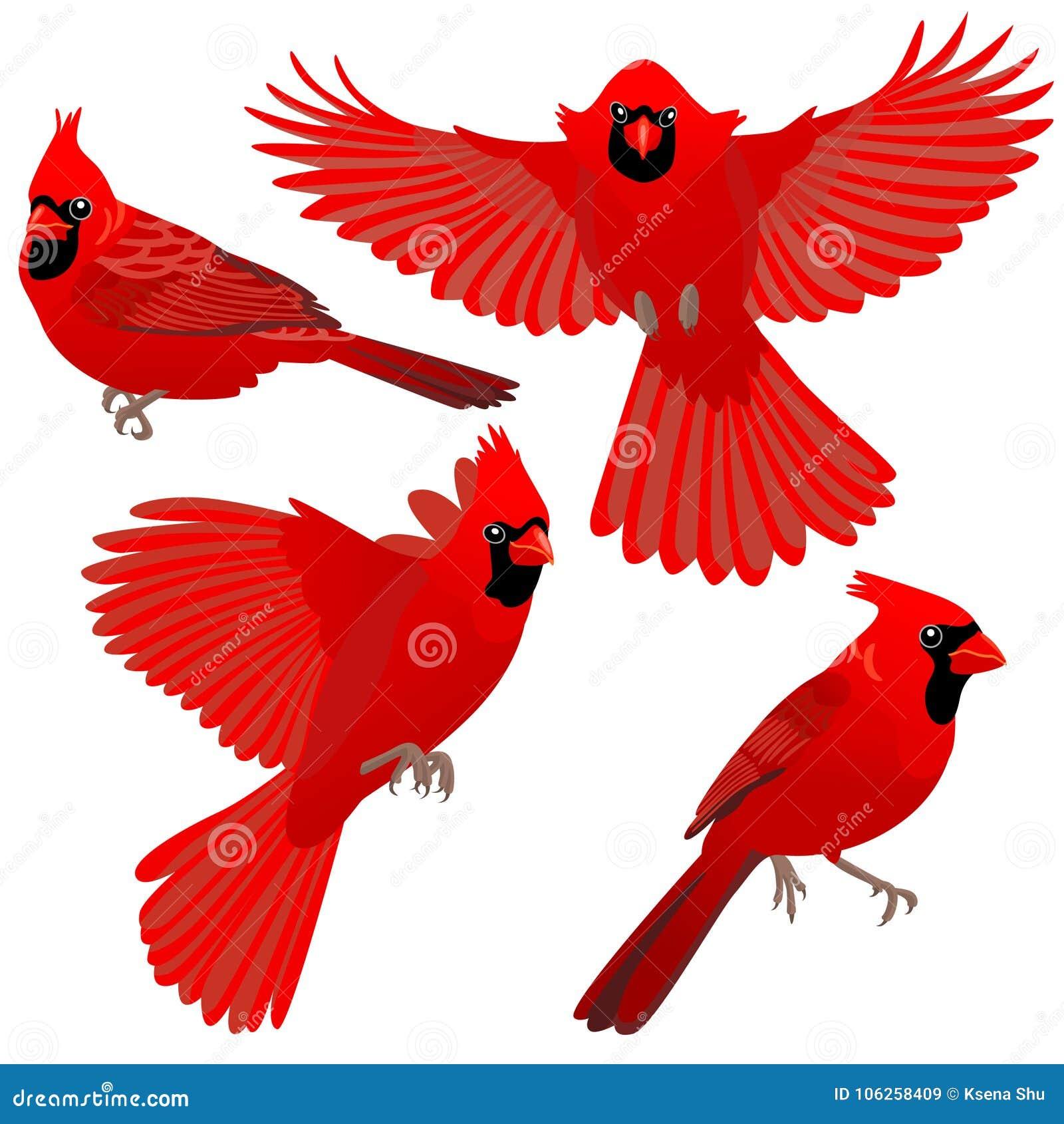 主要鸟四个姿势