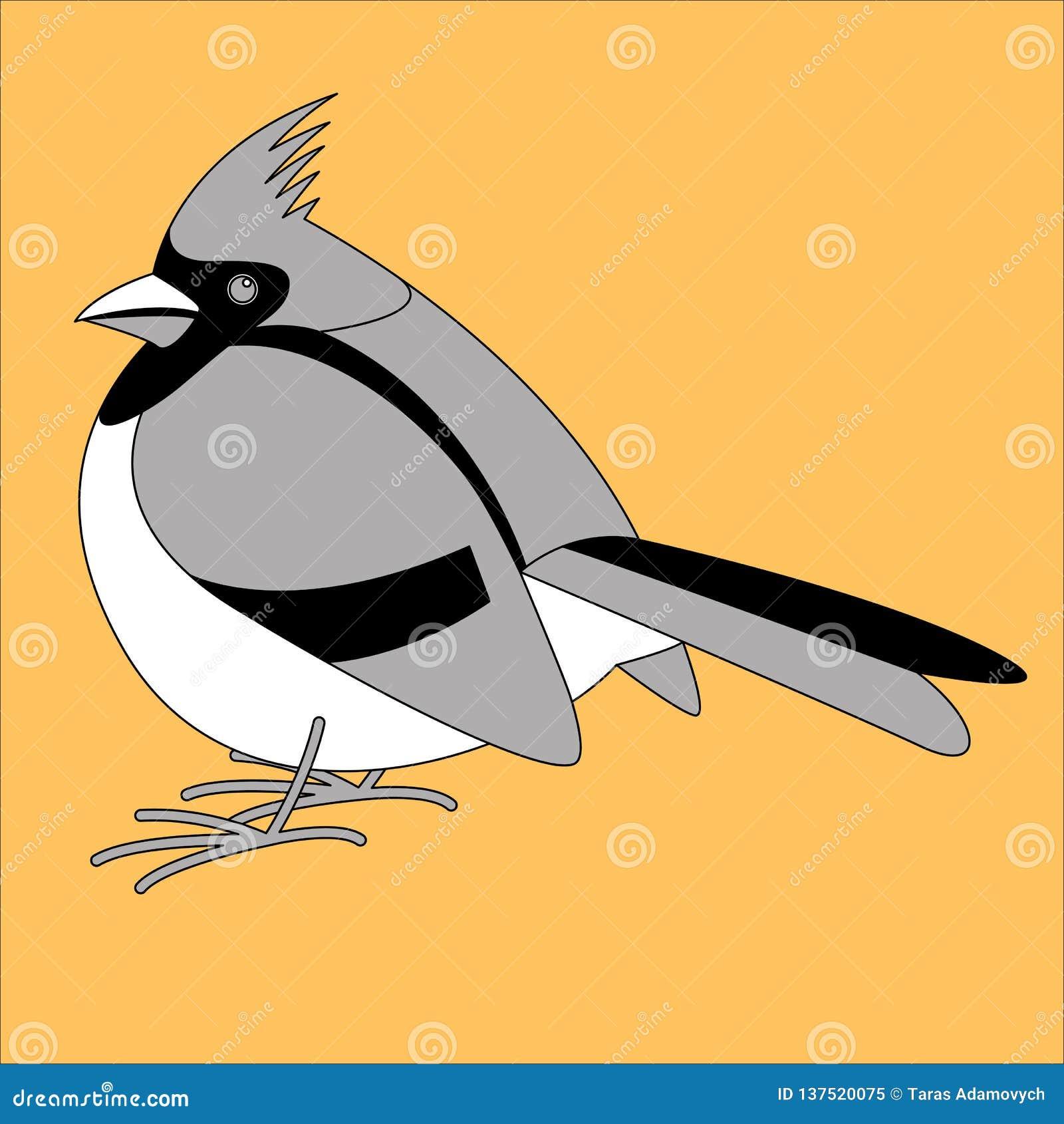 主要鸟,传染媒介例证,排行凹道,外形