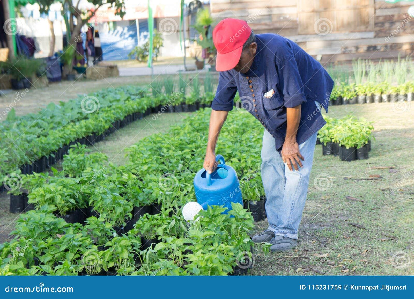 乌隆他尼,泰国农夫花匠浇灌树