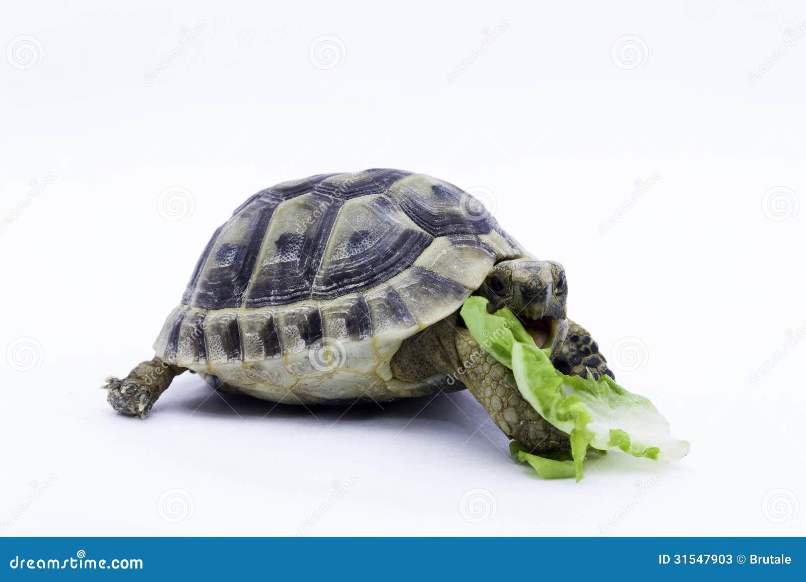 for Oggetti per tartarughe