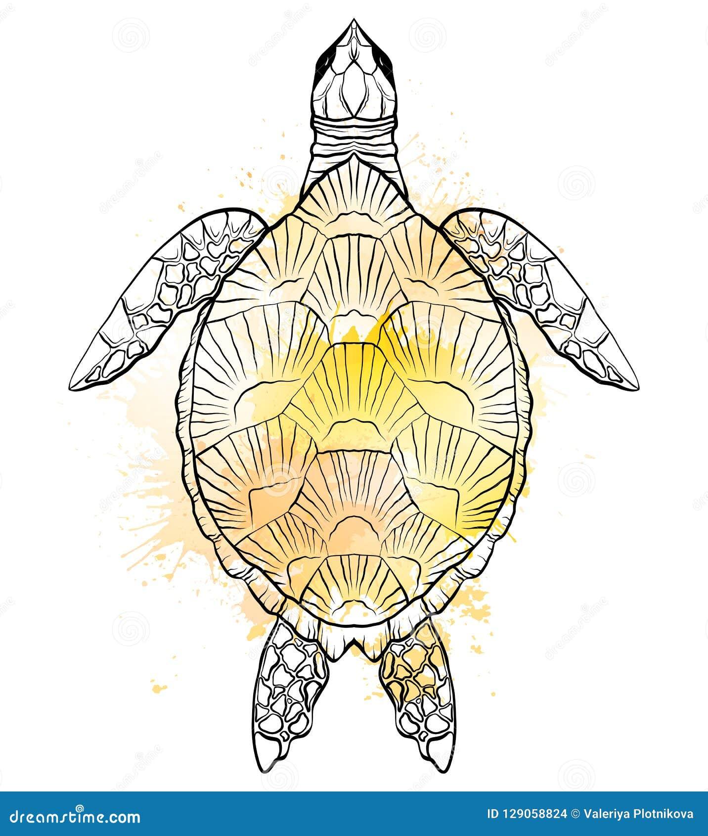 乌龟的等高黑白例证与黄色水彩的飞溅 对象是分别于背景