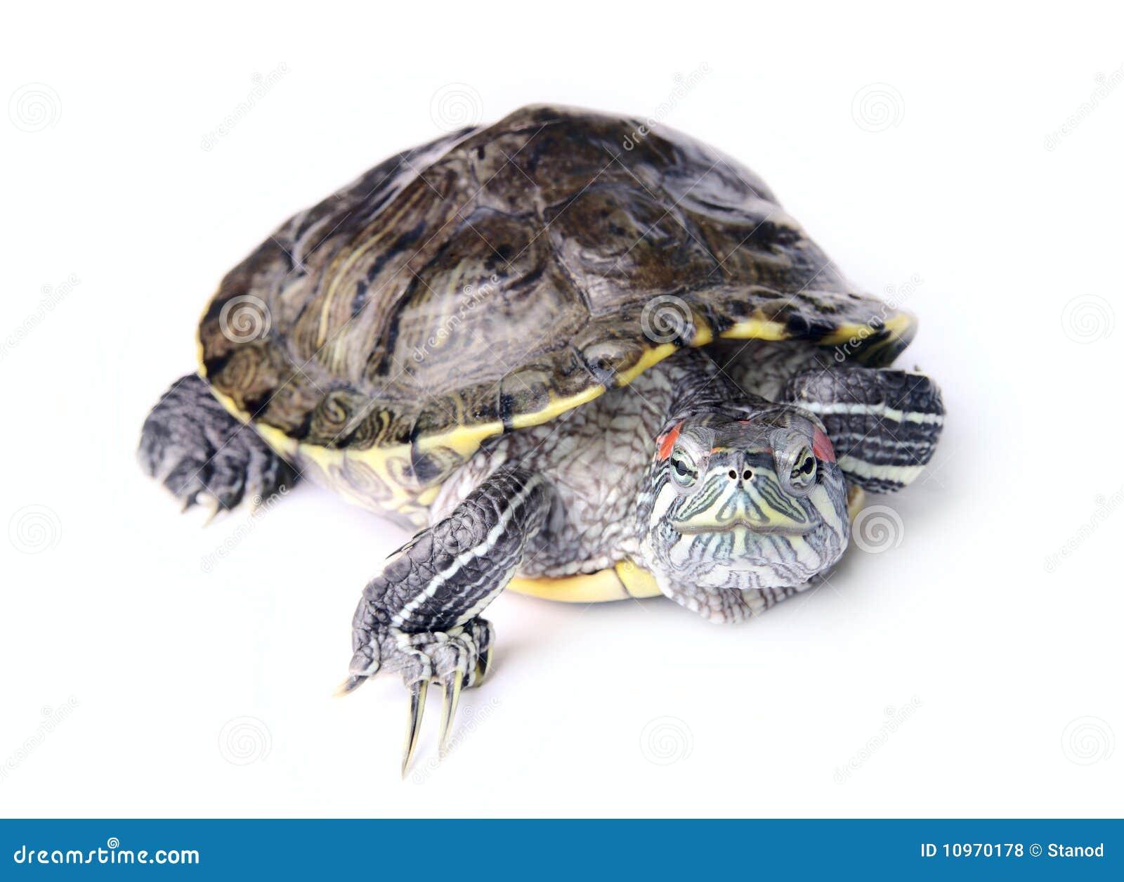 梦见紧紧抓住乌龟