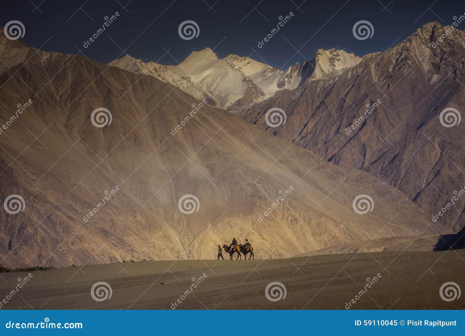 乘坐骆驼Nubra谷拉达克,印度的旅客
