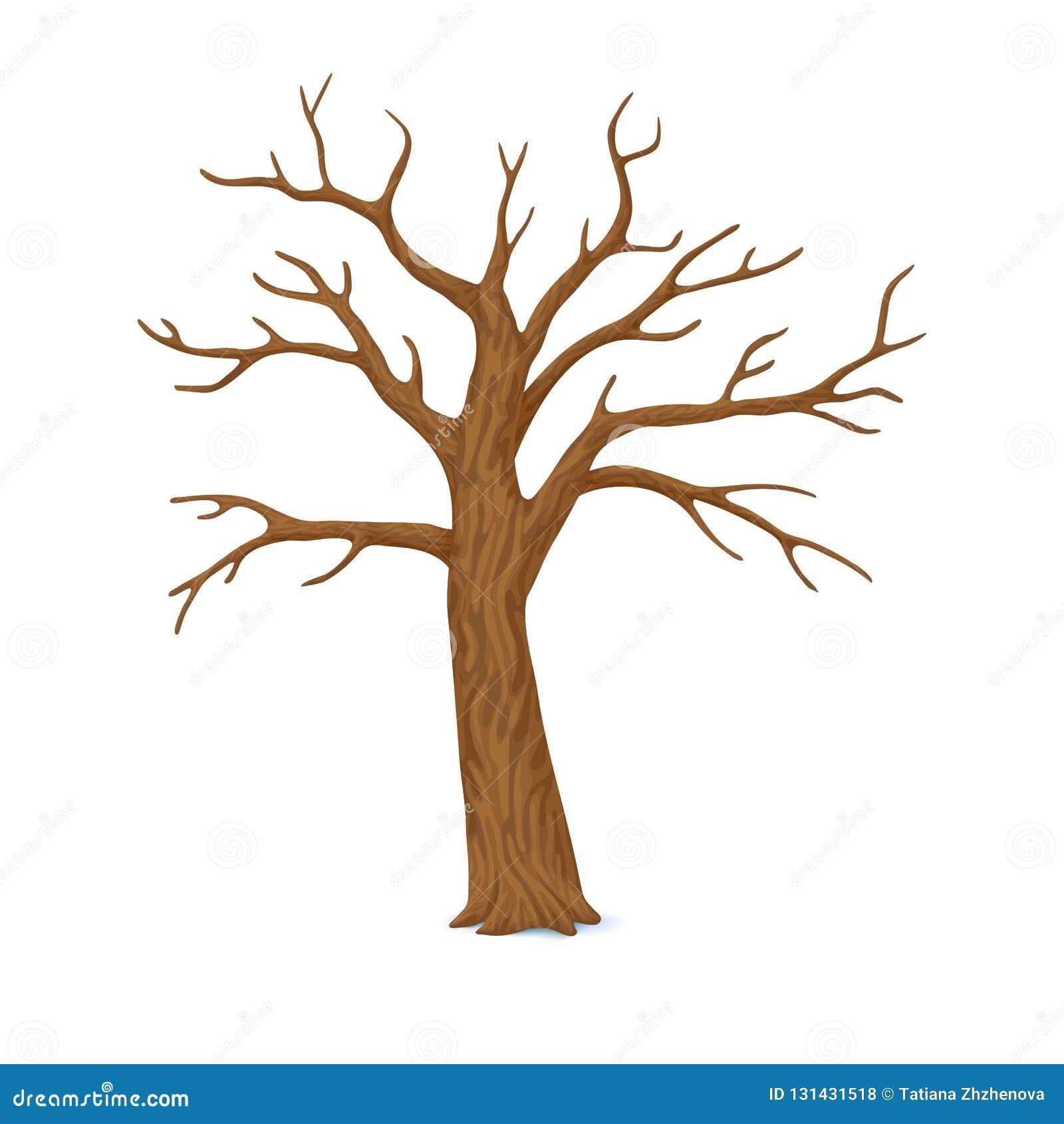 也corel凹道例证向量 冬天,晚秋天象 与在白色背景隔绝的空的分支的唯一光秃,不生叶的树