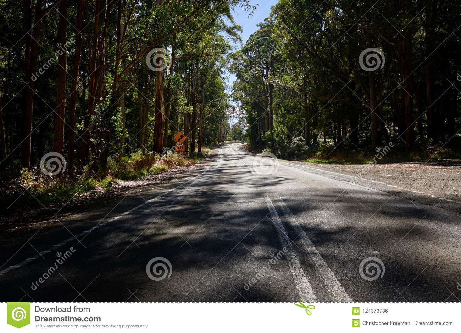 乡下公路绕低谷澳大利亚玉树森林