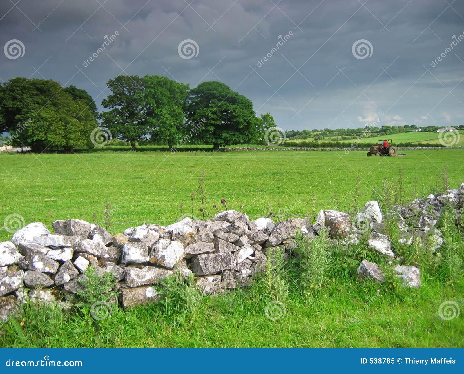 Download 乡下爱尔兰语 库存图片. 图片 包括有 收获, 牛奶, 农田, 庄稼, 增长, 环境, 牧场地, 阿拉伯人, 爱尔兰语 - 538785