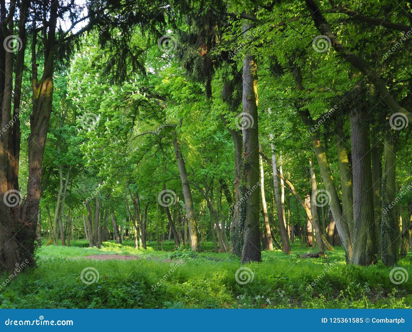 乡下自然照片风景的美丽的晴朗的夏天公园