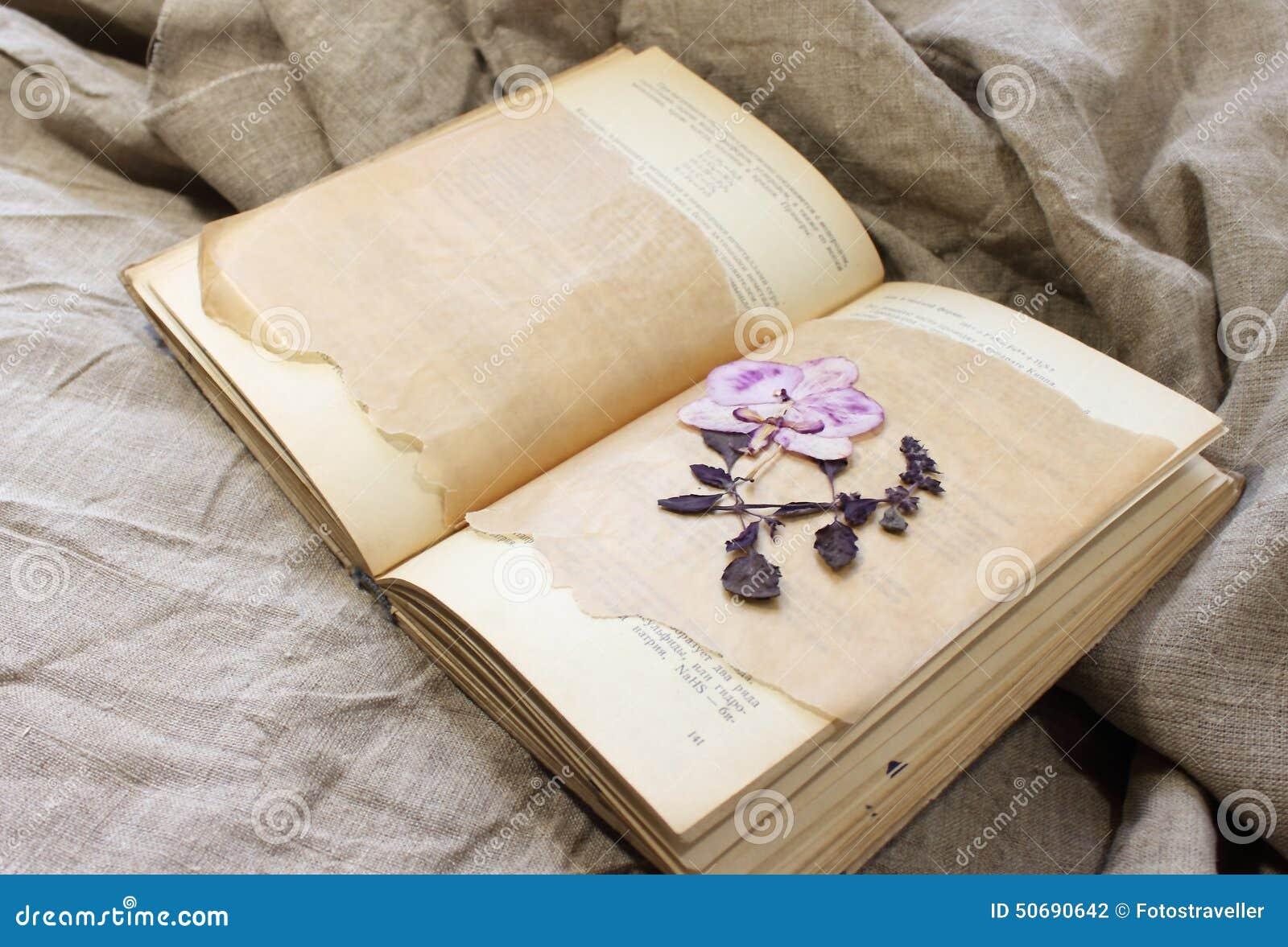 Download 书的干燥标本集 库存照片. 图片 包括有 上升了, 过去, 时间, 秋天, 退色, 钉书匠, 为时, 非常好 - 50690642