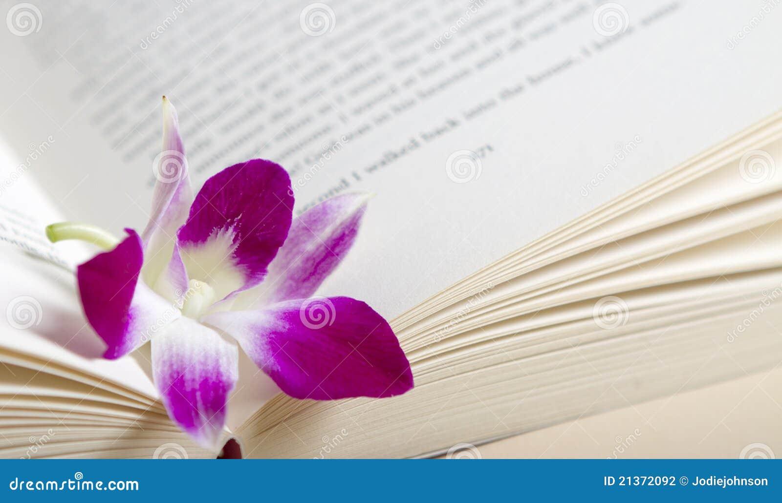 书花兰花粉红色紫色休息