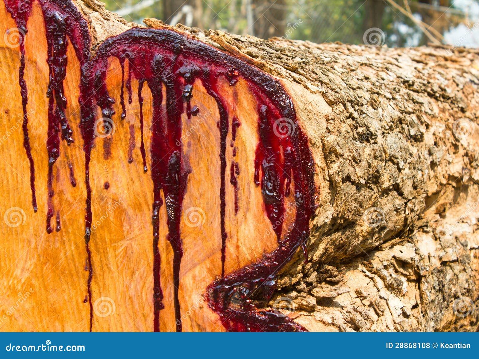 乳汁横断面木头被弄脏红色。