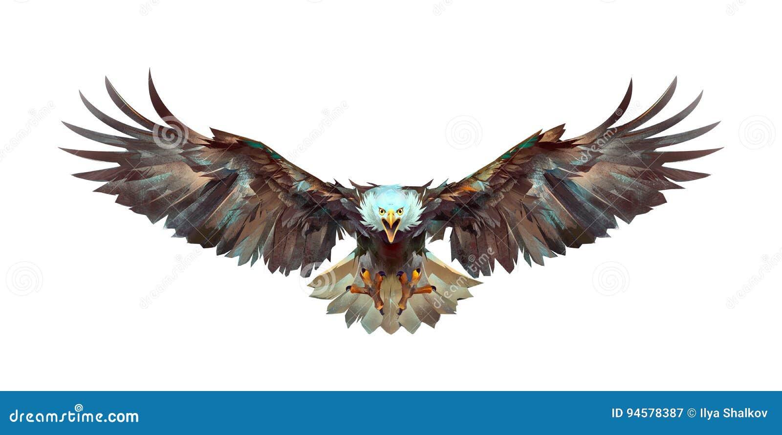 绘了在白色背景前面的一只飞行老鹰