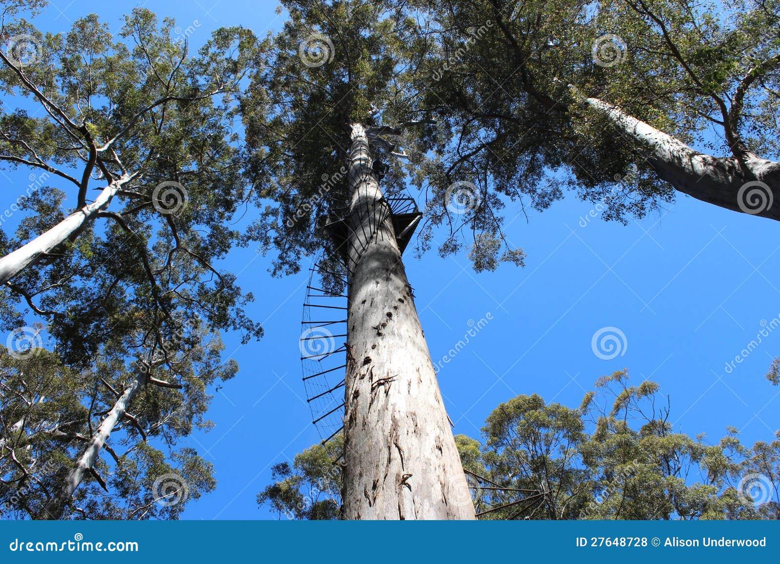 二百年结构树沃伦国家公园西方Aus