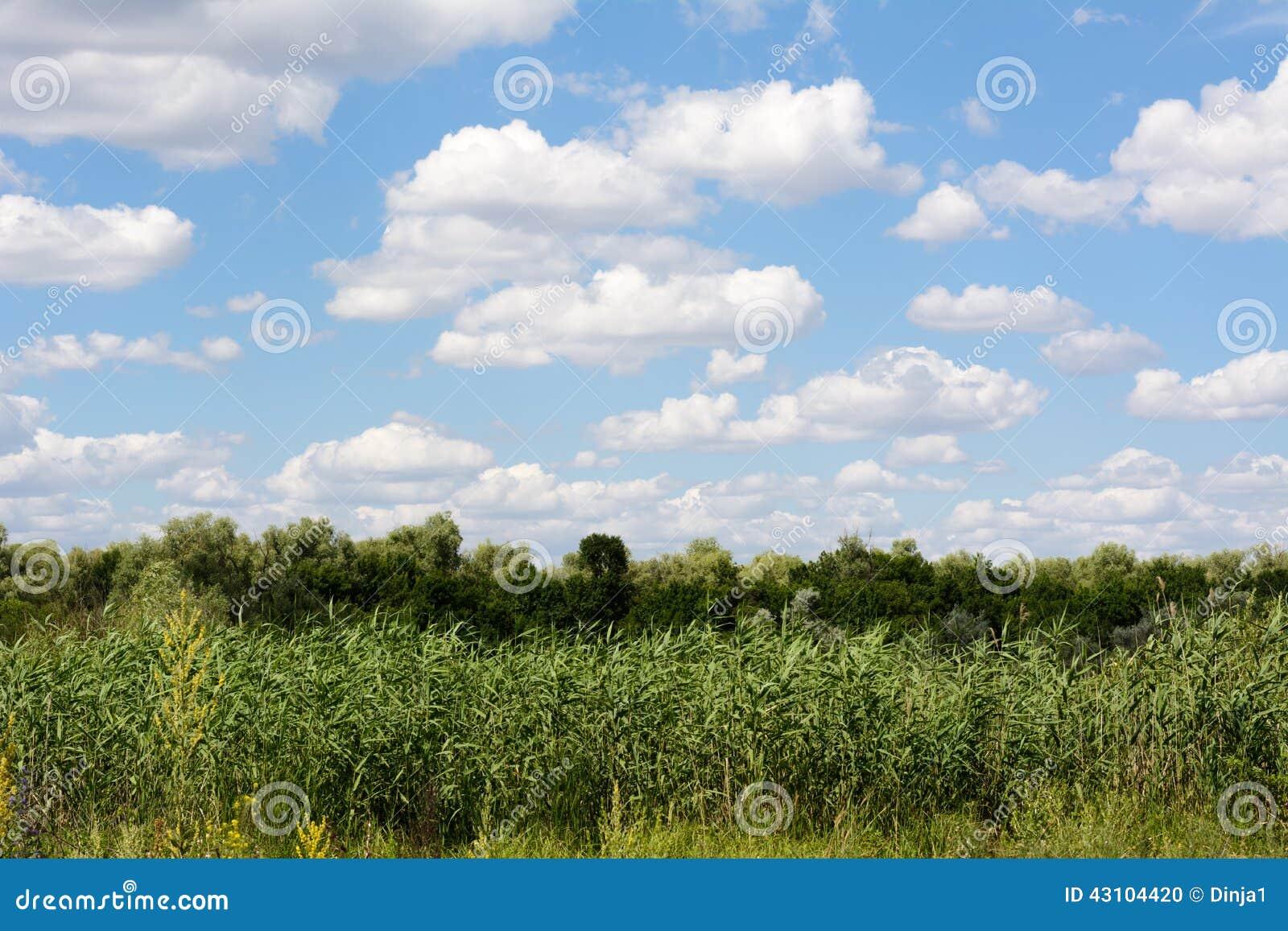 云彩,天空和树贵阳市建筑设计院王娜图片