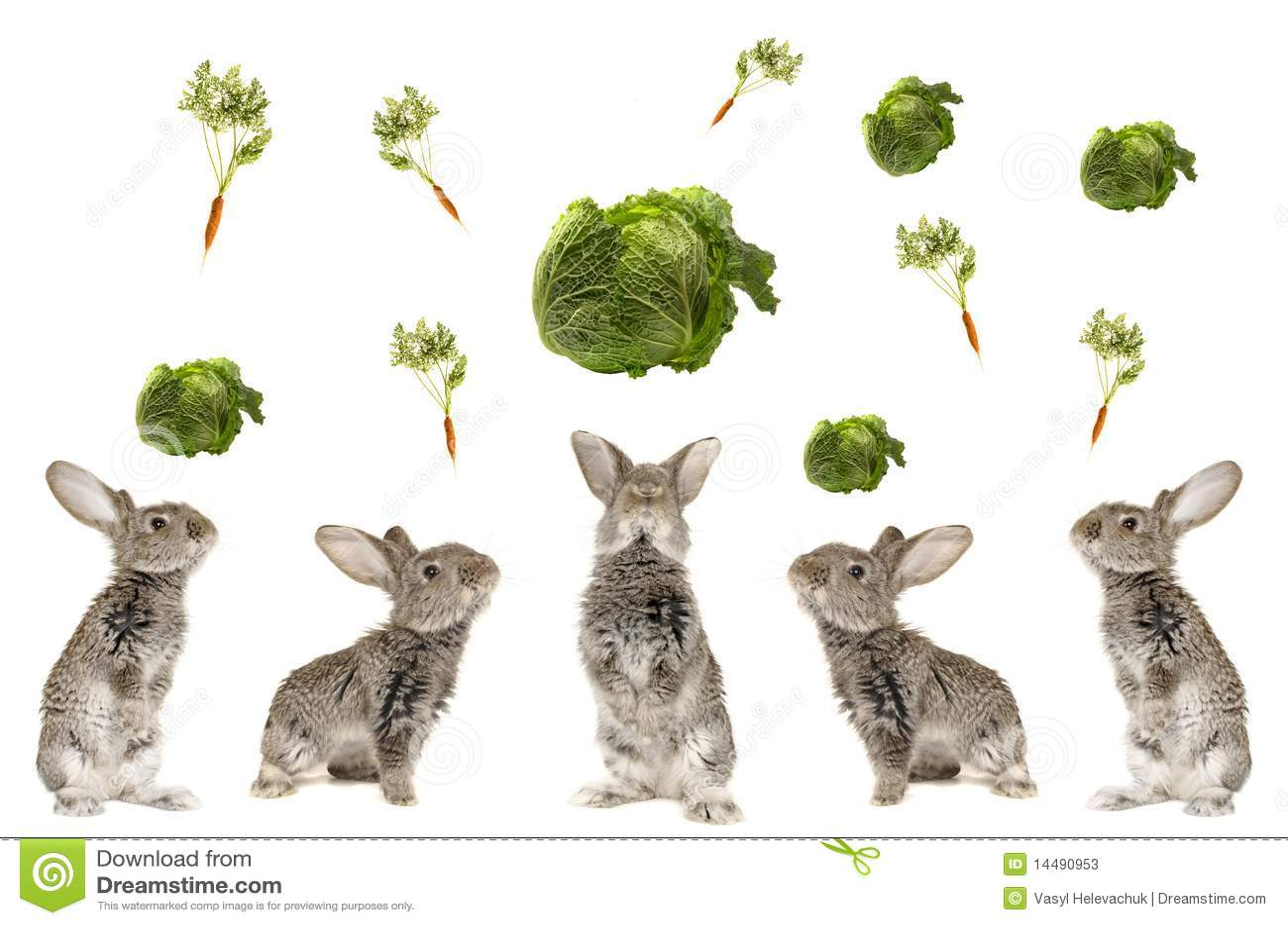 五灰色兔子