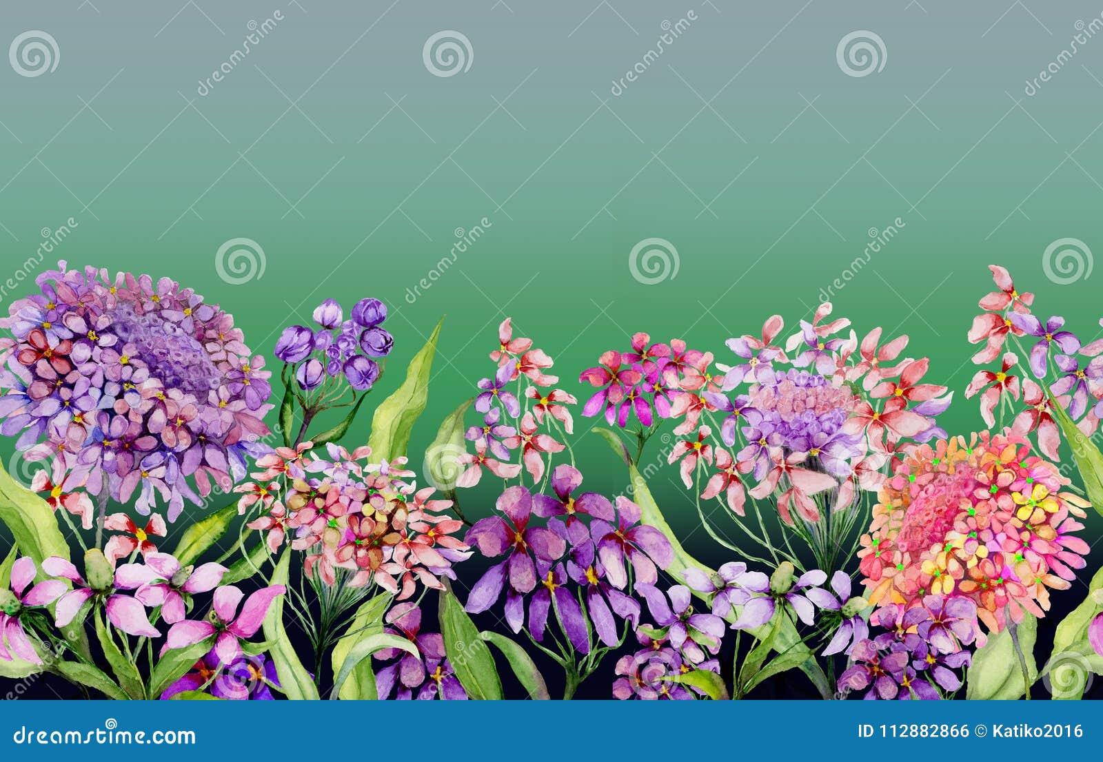五颜六色的夏天宽横幅 生动的屈曲花属植物开花与在梯度绿色背景的绿色叶子 水平的模板