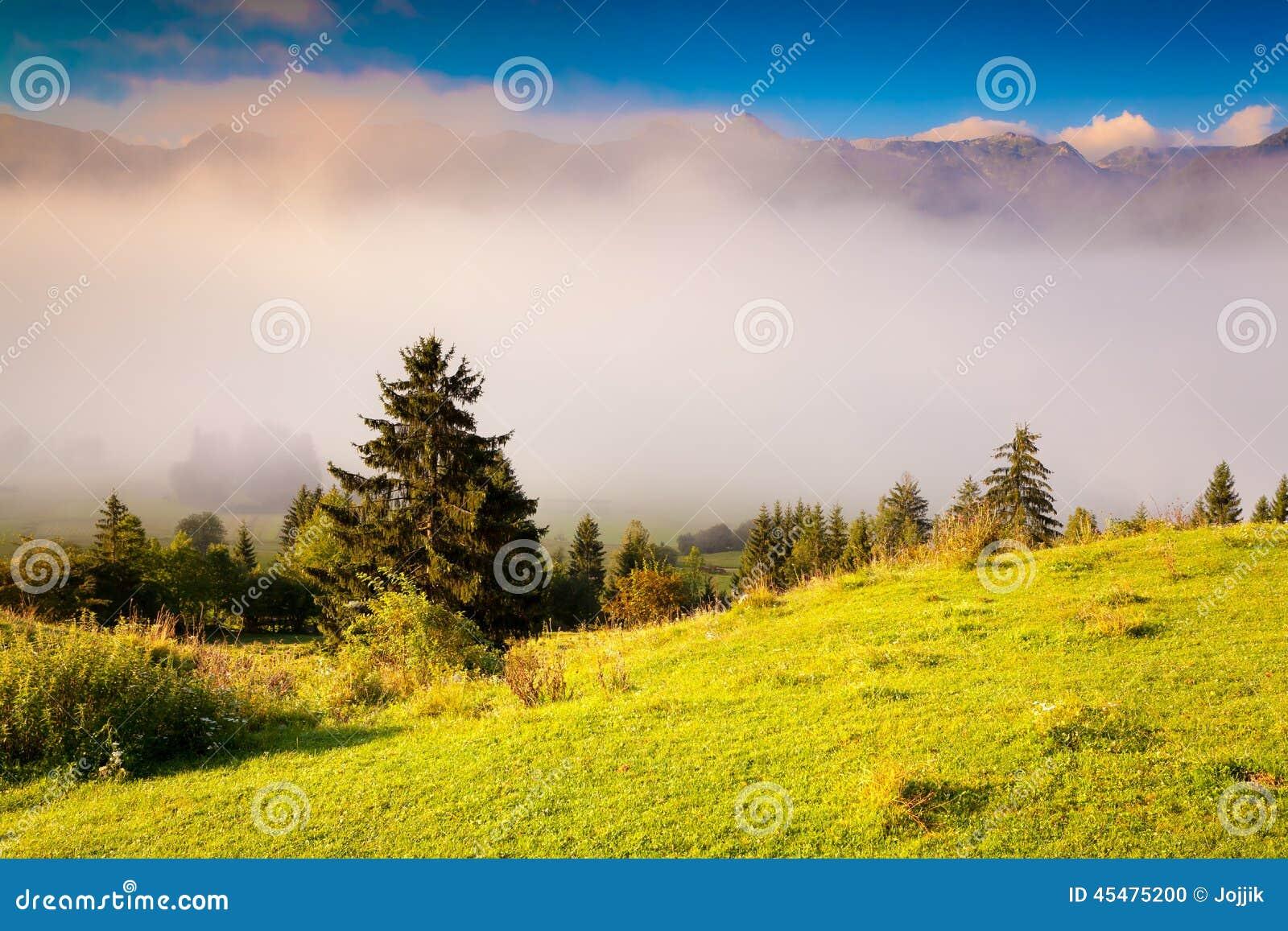 五颜六色的夏天早晨在特里格拉夫峰国家公园斯洛文尼亚, A