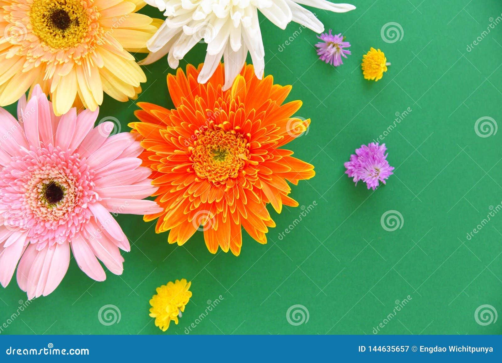 五颜六色的大丁草春天花夏天美好开花在绿色背景-舱内甲板位置顶视图