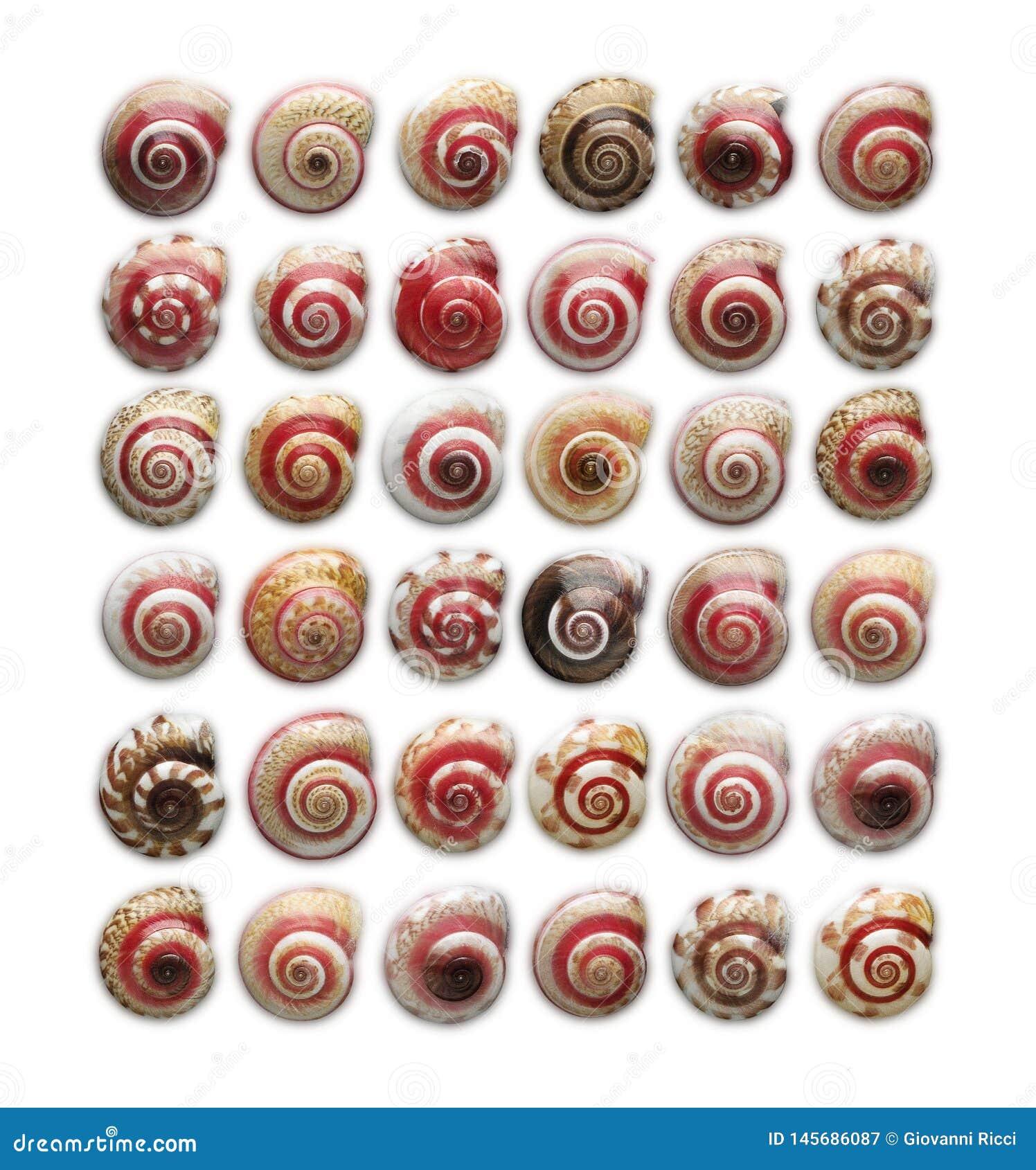 五颜六色的小蜗牛