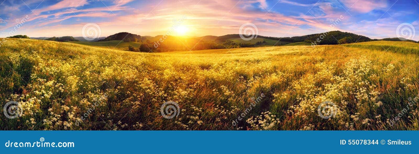 五颜六色的日落的全景在美丽的草甸的