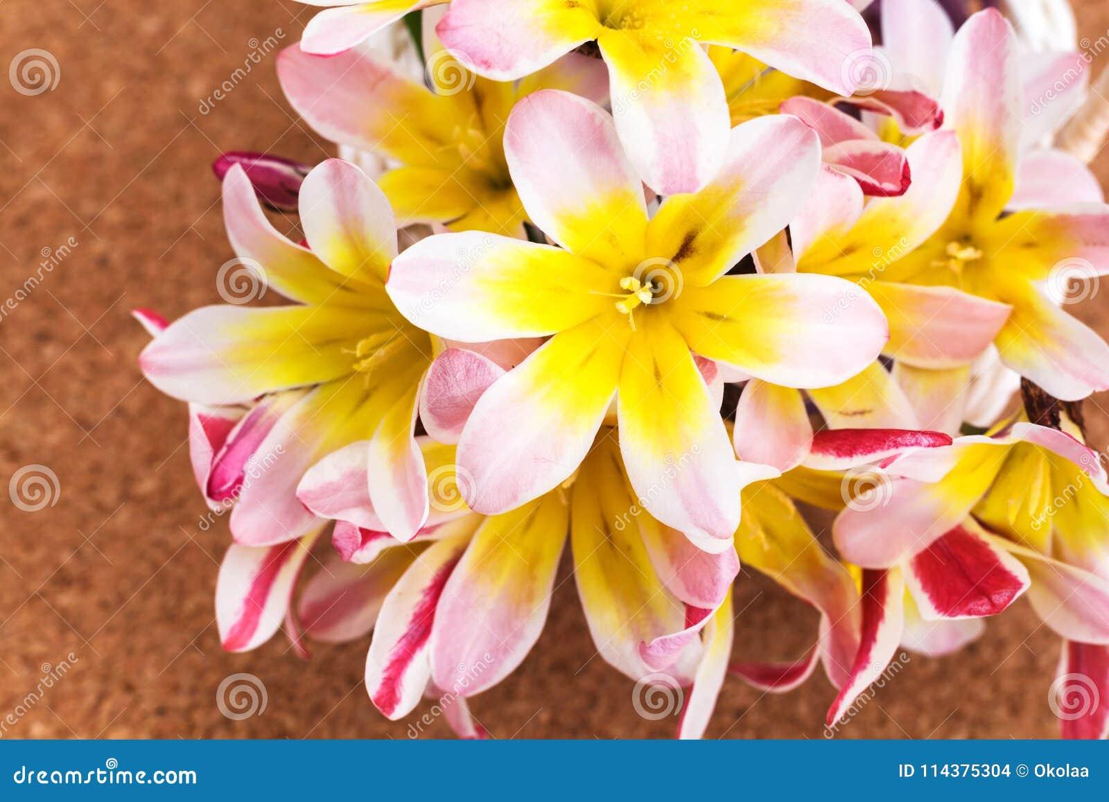 五颜六色的春天花花束,在黄柏