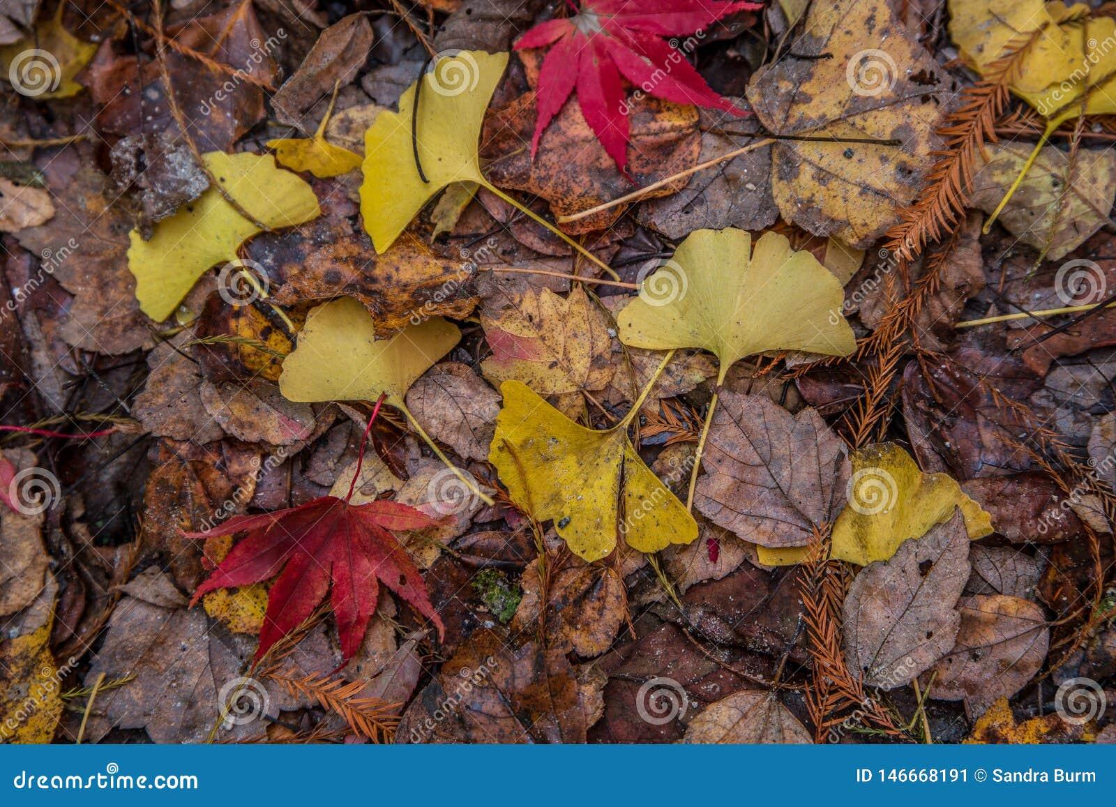 五颜六色的森林地板在秋天