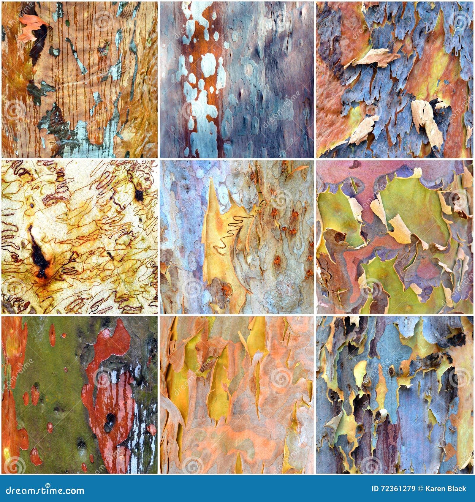 五颜六色的澳大利亚gumtree吠声拼贴画